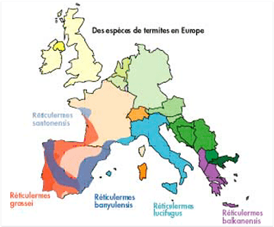 Termites: Carte de la répartition des termites en Europe.